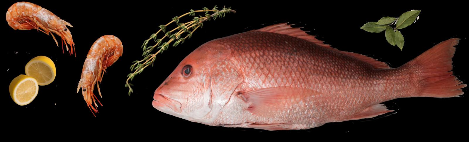 Shrimp, Red Snapper